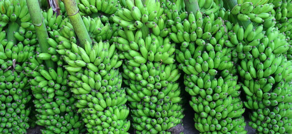 Market on Sri Lanka Abundance Arrangement Backgrounds Banana Color Palette Food And Drink For Sale Freshness Full Frame Green Green Bananas Green Color Healthy Eating High Angle View Market Organic Repetition Retail Display Sri Lanka Tropical Fruits