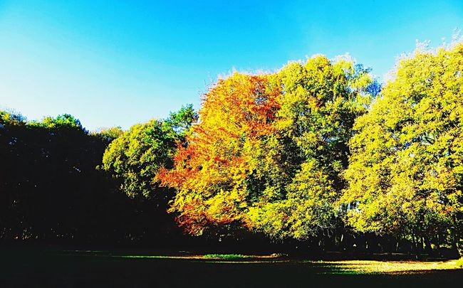 Hanging Out Taking Photos Hello World Autumn Autumn Colors Autumn Leaves Autumn🍁🍁🍁 Landscape Landscape_Collection Colors