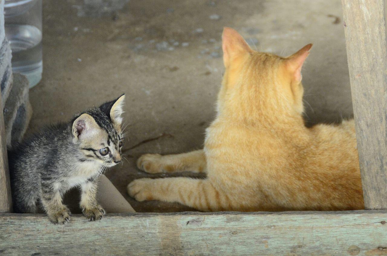 Cat♡ Animal Themes Domestic Cat Feline Cat Alert Cat Kitten EyeEm Animal Lover Meow Cat Lovers Stray Cat Cats Of EyeEm