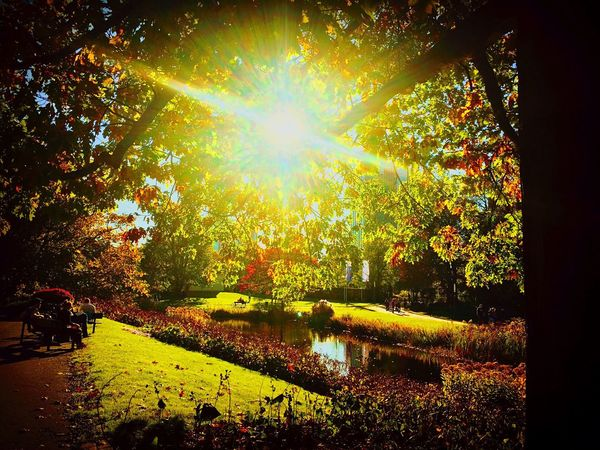 Sunbeam Tree Sunlight Nature Sun Lens Flare Tranquility Tranquil Scene Growth Beauty In Nature Scenics Outdoors Day Leaf No People Autumn Landscape Sky Planten Un Blomen - Hamburg, Germany Autumn Leaves Autumn Colors Park - Man Made Space October Sun Sunday Afternoon Sunny Day