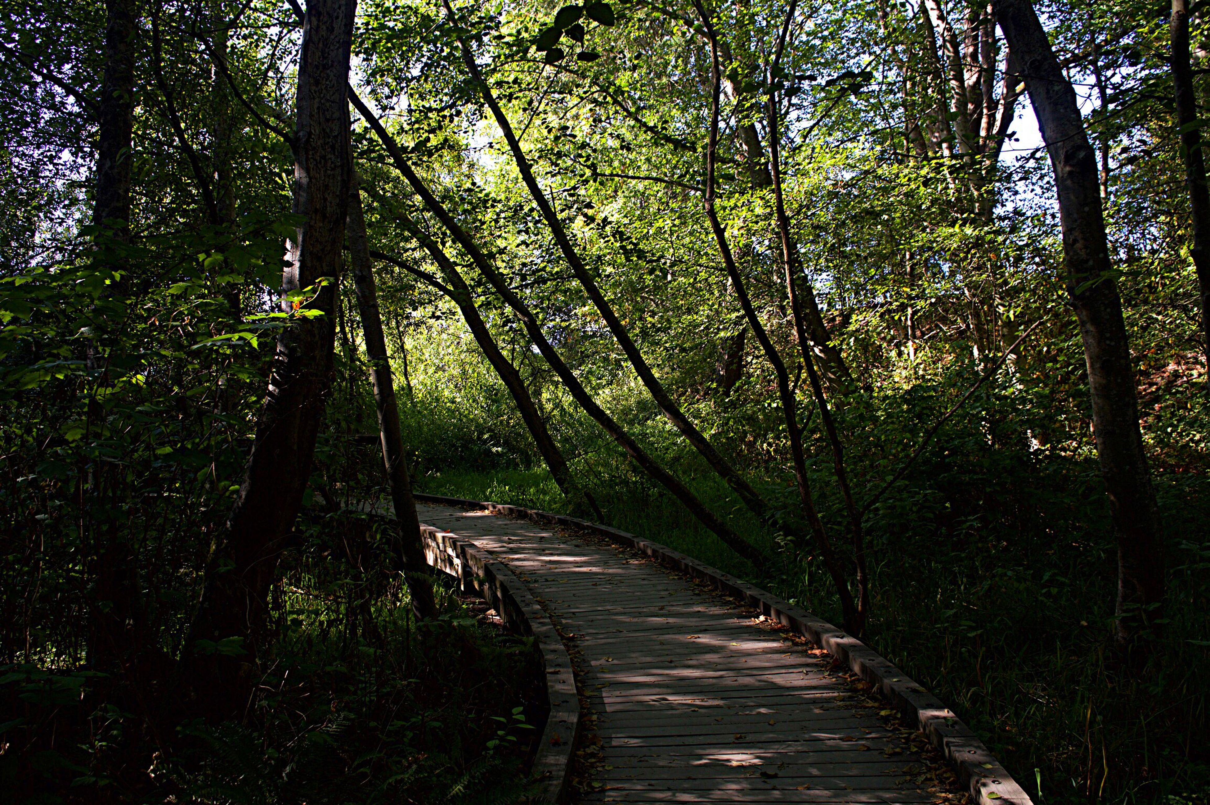 tree, tranquility, tranquil scene, growth, the way forward, forest, tree trunk, narrow, walkway, green color, long, scenics, nature, tourism, footpath, pathway, non-urban scene, beauty in nature, branch, woodland, green, day, travel destinations, vacations, outdoors, lush foliage, solitude, treelined, woods, boardwalk, pedestrian walkway