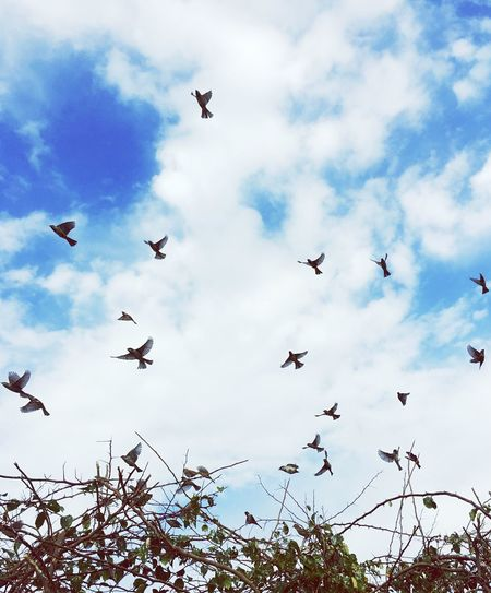 Live For The Story BE FREE 💫 Flying Bird Cloud - Sky Flock Of Birds Spread Wings Mid-air Outdoors Nature No People Beauty In Nature Serenity EyeEmNewHere Egypt Cairo Befree Eyemphotography EyeEm Best Shots - Nature Beauty In Nature Peaceful View