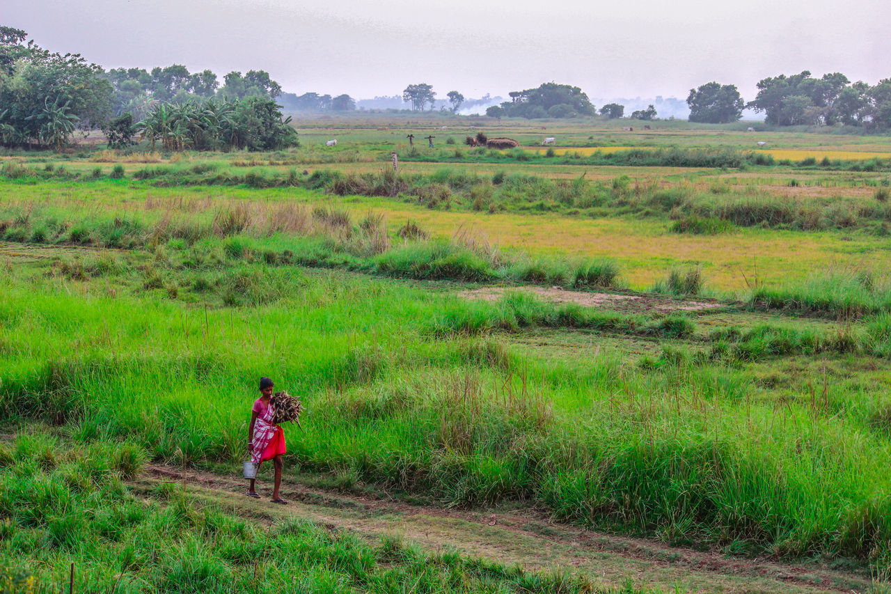 Agriculture Field Farm Working Nature Landscape Rural Scene Growth One Person Real People Occupation Scenics Farmer Outdoors Beauty In Nature Standing Adult Women Sky Manual Worker The Great Outdoors - 2017 EyeEm Awards Canon700D Canon_official Live For The Story The Week On EyeEem