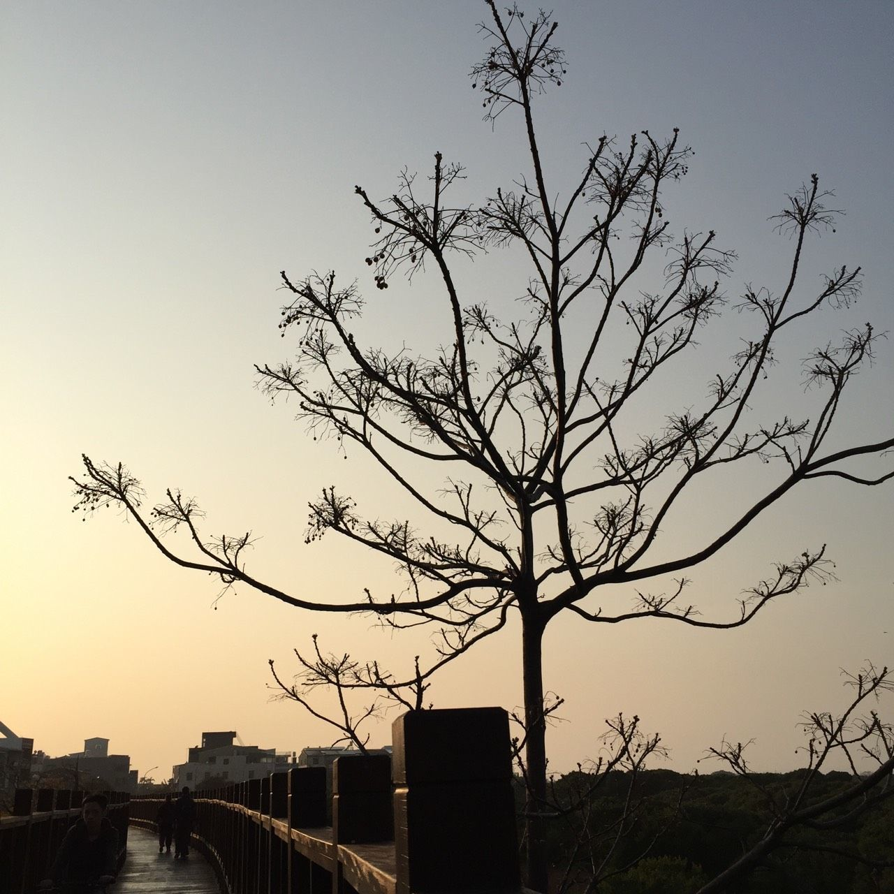 silhouette, tree, built structure, architecture, no people, outdoors, building exterior, sunset, bare tree, sky, city, branch, nature, day, bird
