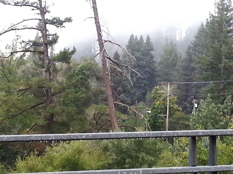 Santa Cruz Mountain Nature Love Mylife Redwoodreclouse Boulder Creek Ca Smells Of 420 Harvesttime