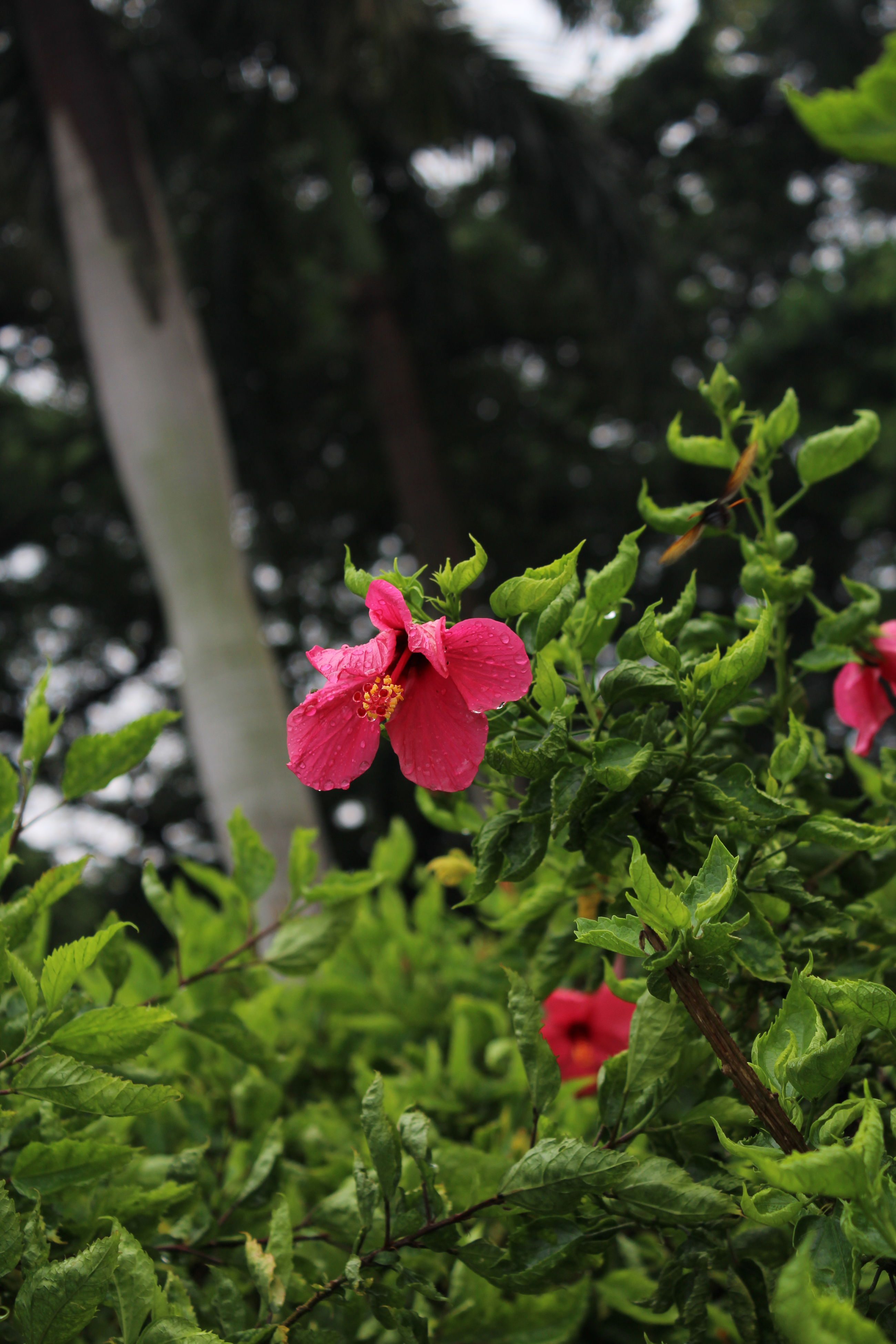 flower, freshness, growth, petal, pink color, fragility, leaf, beauty in nature, flower head, plant, blooming, nature, green color, focus on foreground, in bloom, pink, close-up, blossom, park - man made space, outdoors