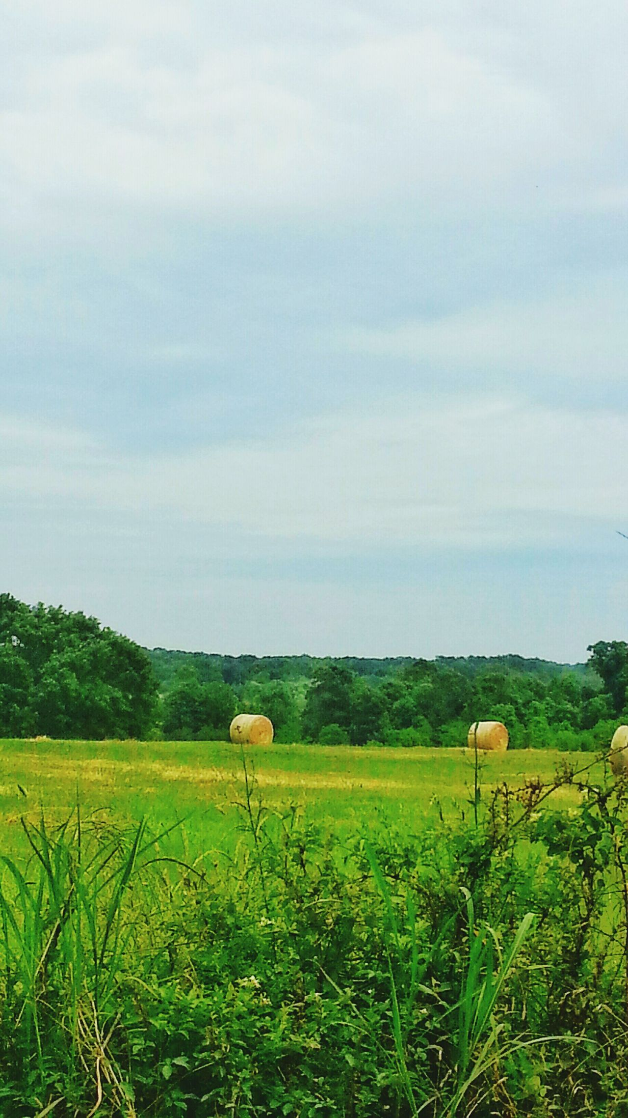The Great Outdoors - 2016 EyeEm Awards Round Hay Bales Round Hay Bails Grass Animal Food Pasture Land Landscape Outdoor Photography Treescape Blue Sky Cow Pasture Landscape_photography Meadow