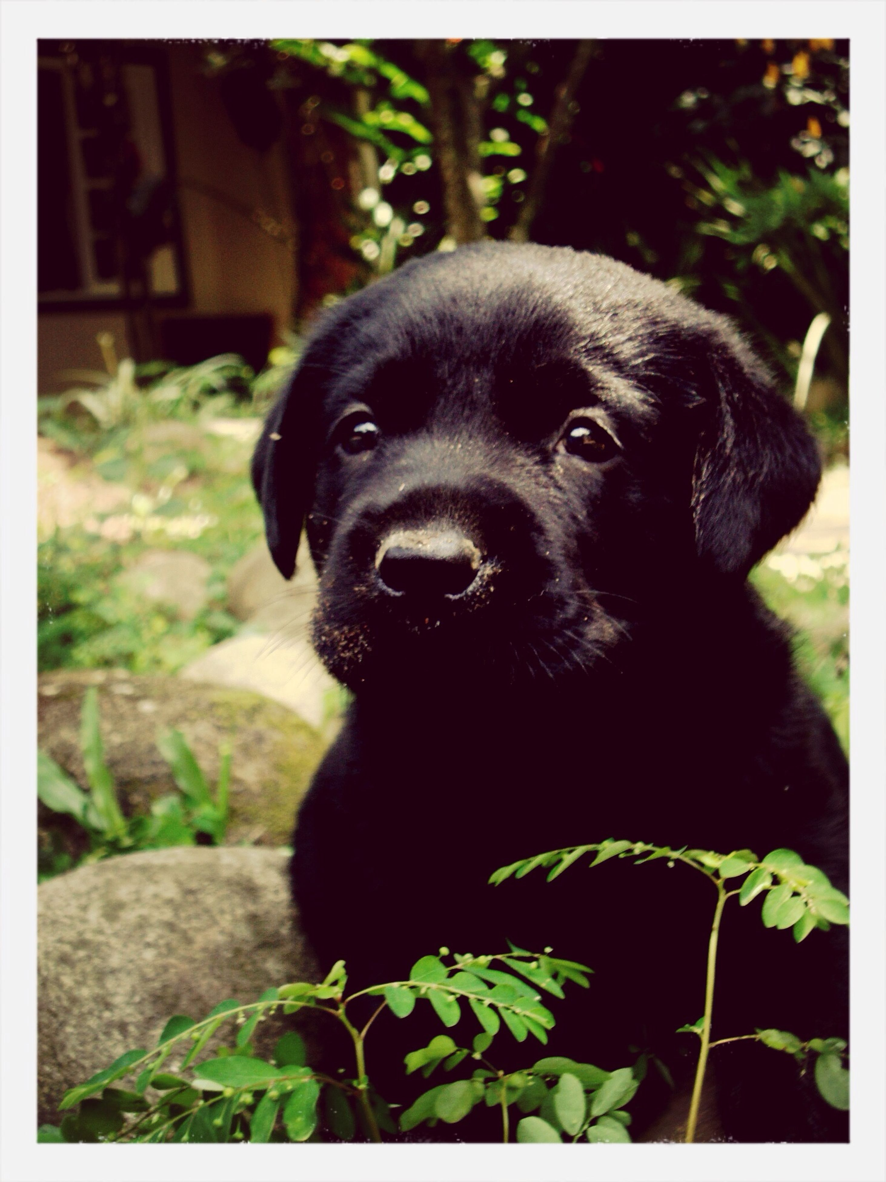 animal themes, one animal, mammal, pets, transfer print, domestic animals, focus on foreground, relaxation, close-up, portrait, dog, sitting, animal head, auto post production filter, plant, looking at camera, black color, resting, no people, day