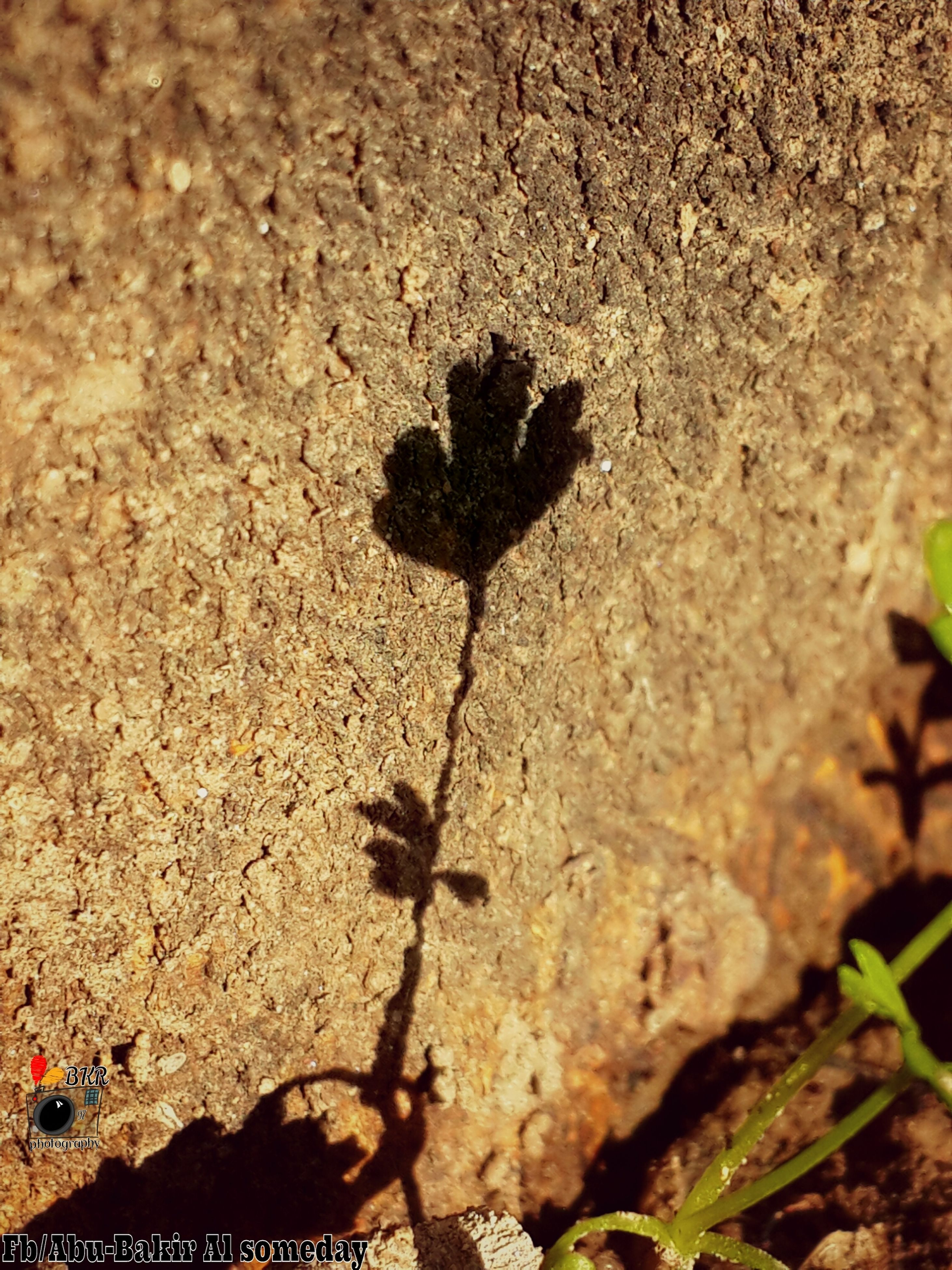 growth, nature, plant, leaf, rock - object, high angle view, textured, tranquility, growing, day, outdoors, close-up, sunlight, sand, cactus, no people, dead plant, beauty in nature, tree trunk, rock