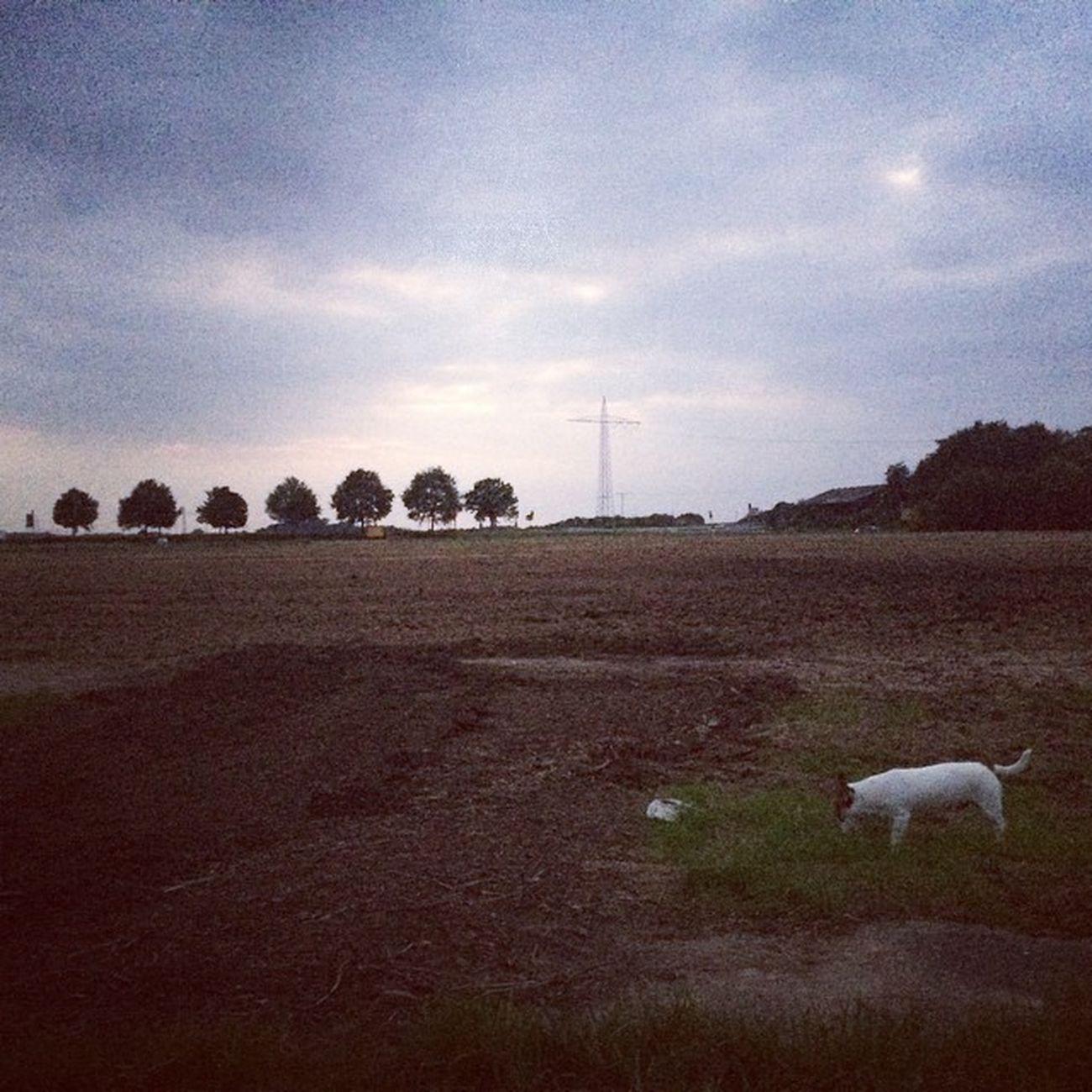 Spazierenmitdemhund