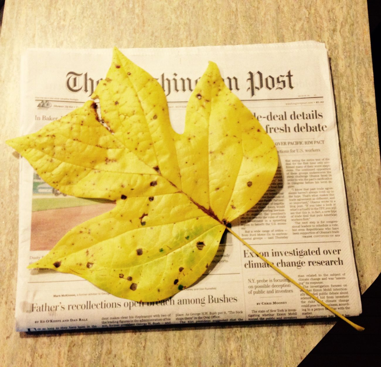 Super sized leaf! Nature autumn Washington Post