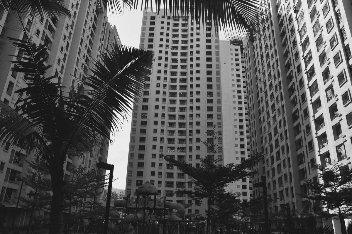 Adapted To The City Palm Tree City Built Structure Architecture Tree Outdoors No People Building Exterior Low Angle View Day