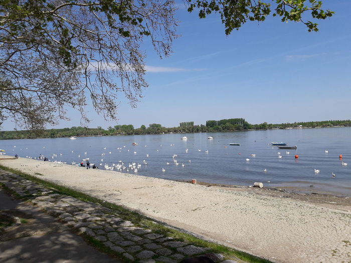 Water Beach Sand Tranquility Nature Outdoors Sky Tranquil Scene Day Blue Vacations Travel Destinations Clear Sky Horizon Over Water River Danube Zemun Serbia Cob Swan