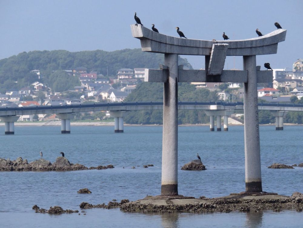 Hanging Out Taking Photos Hello World Enjoying Life Check This Out Bird Birds Bird Photography Birds_collection TORII Torii Gate Sea Sea And Sky Seascape