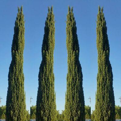 Tree6 Christophography Leaves Greenbush Thegreatoutdoors-2016eyeemawards Blue Sky Blue