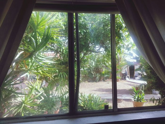 Paradise. Relaxing Nature Outside My Window Green