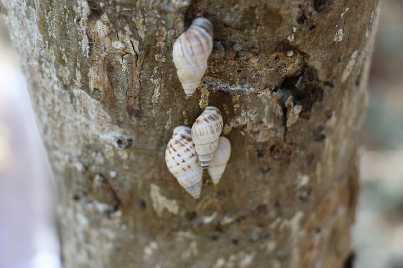 animal themes, close-up, animal wildlife, animals in the wild, tree trunk, textured, no people, day, nature, one animal, seashell, focus on foreground, outdoors, tree