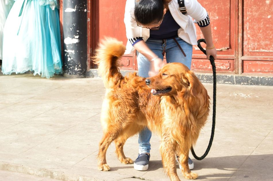 Dog Pets One Animal One Person Domestic Animals Day Standing Outdoors Mammal Real People Sitting Full Length Men People Adult One Man Only Young Adult Adults Only