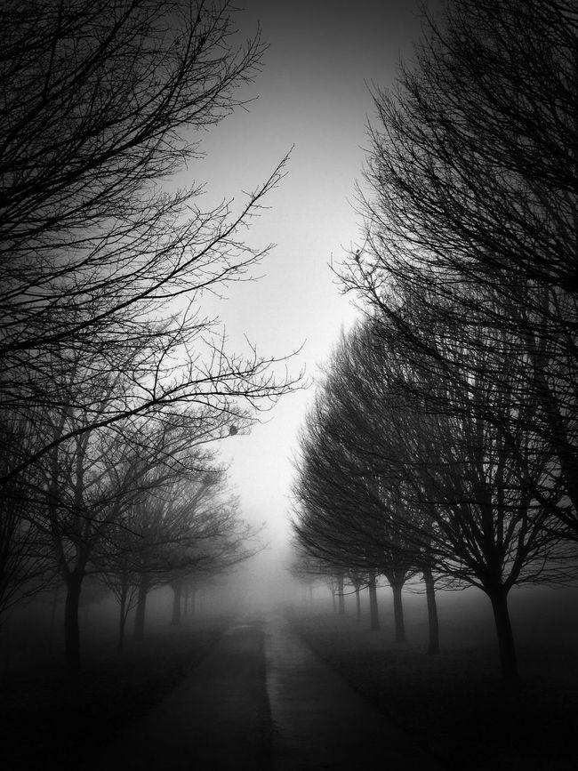 Foggy Morning Nature Photography Nature Nikon D7000