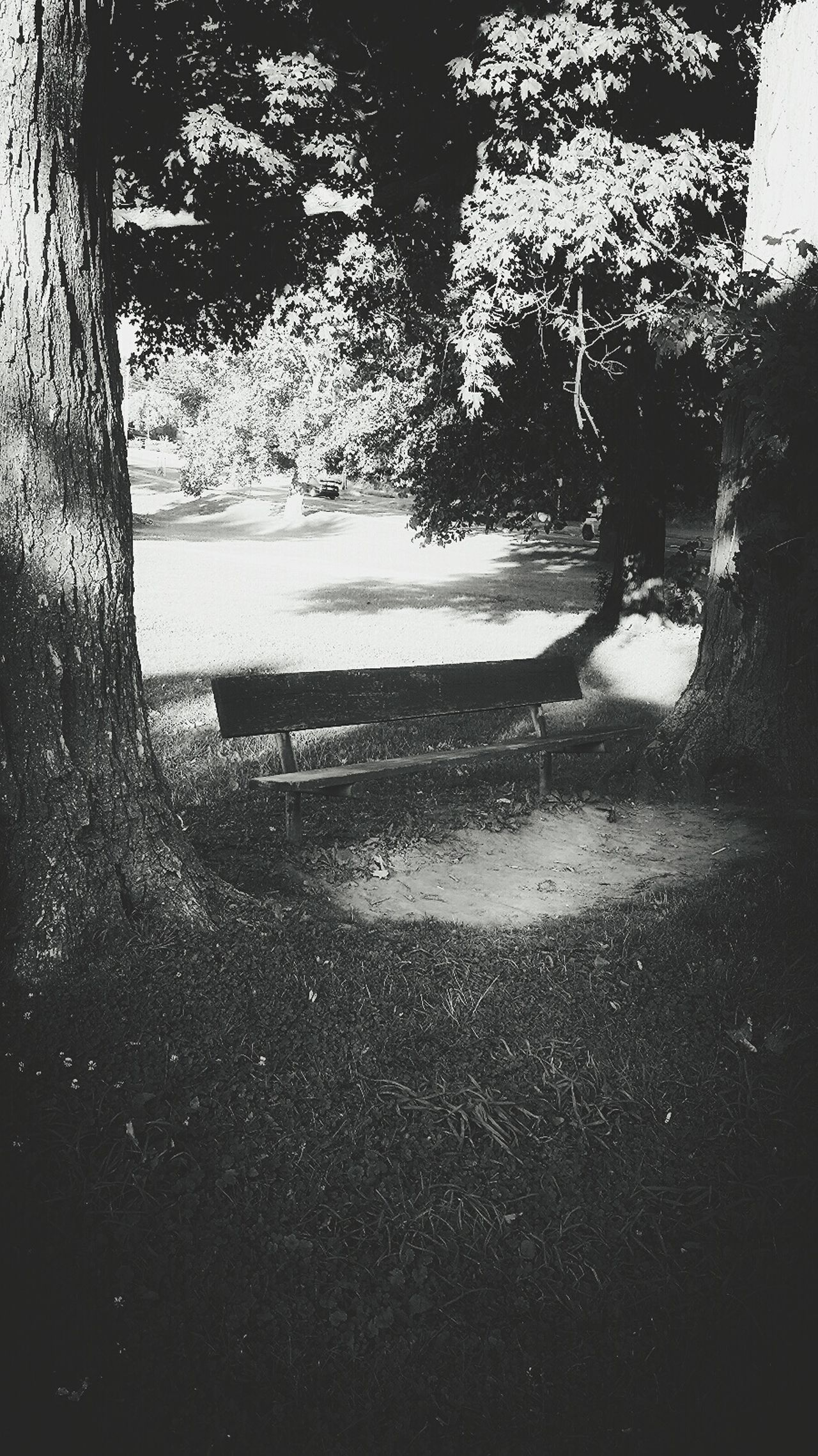 Syracuse Ny Rosehill Cemetery Park Bench Benches Blackandwhite Photography
