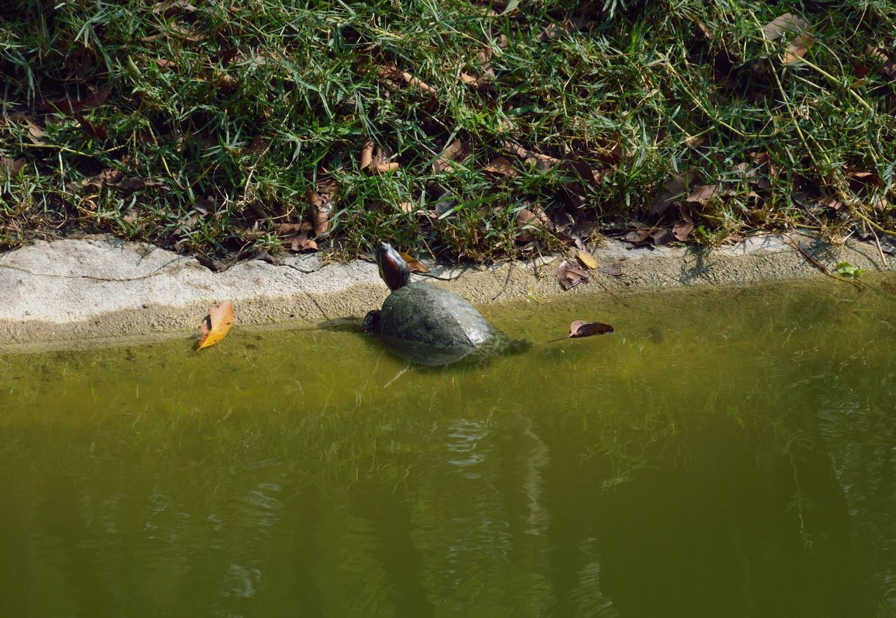 Animal Themes Animals In The Wild Water Reflection Nature Swimming Outdoors No People Day Lake Beauty In Nature Mammal Turtle 🐢 Turtle Fresh Water Turtle Sunbathing☀ Sunbathing