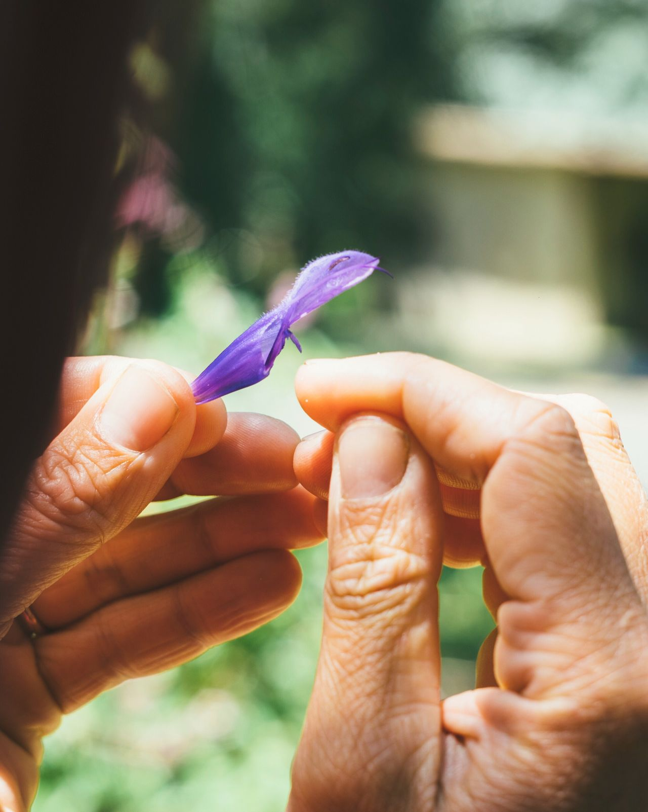 Human Hand Human Body Part Focus On Foreground Holding Human Finger Real People One Person Close-up Outdoors Day Childhood Women People Nature Flower Botany Curiosity Learning Rural Poetry
