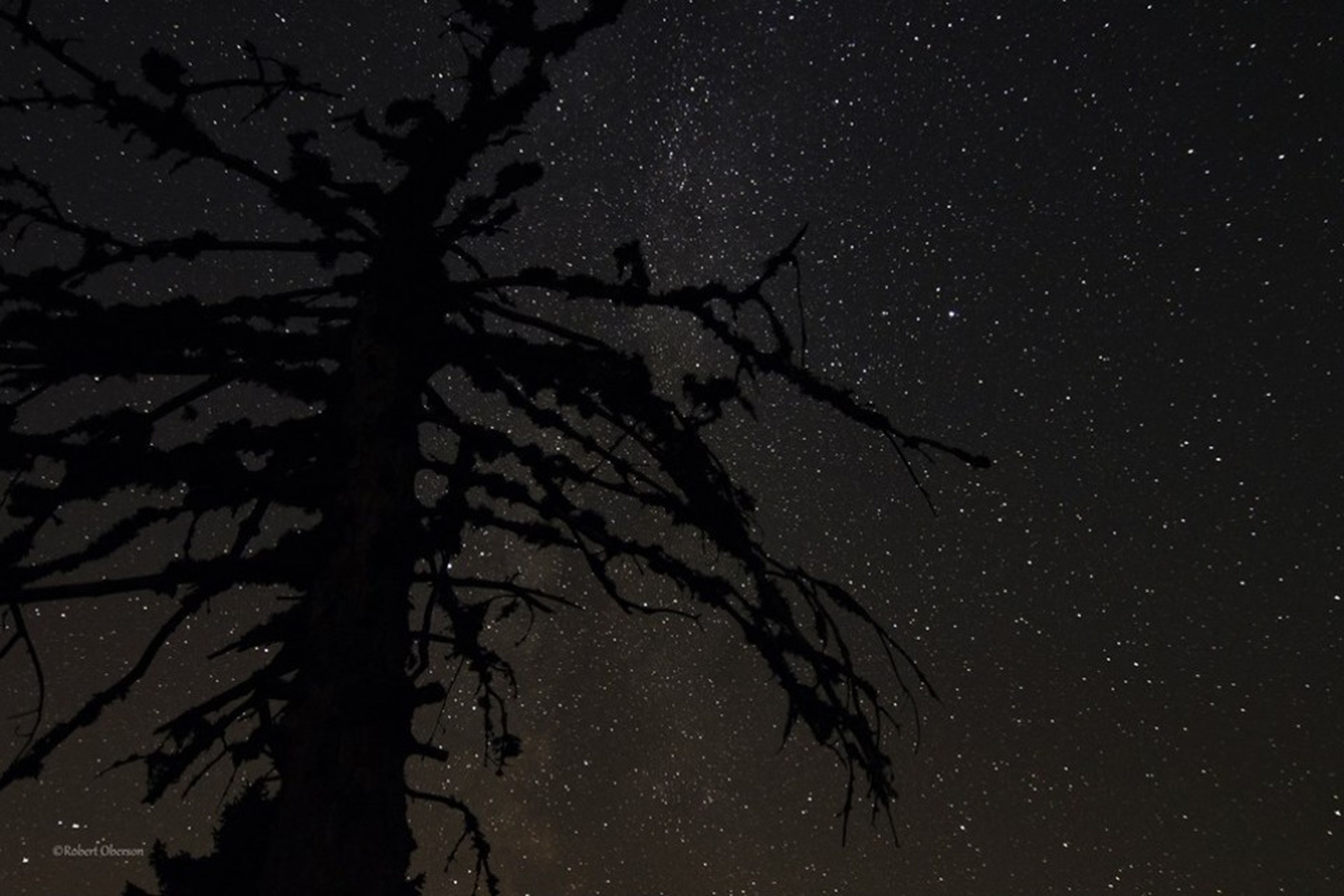 night, low angle view, silhouette, branch, tree, bare tree, sky, tranquility, nature, dark, beauty in nature, star - space, scenics, dusk, tranquil scene, moon, outdoors, astronomy, growth, no people