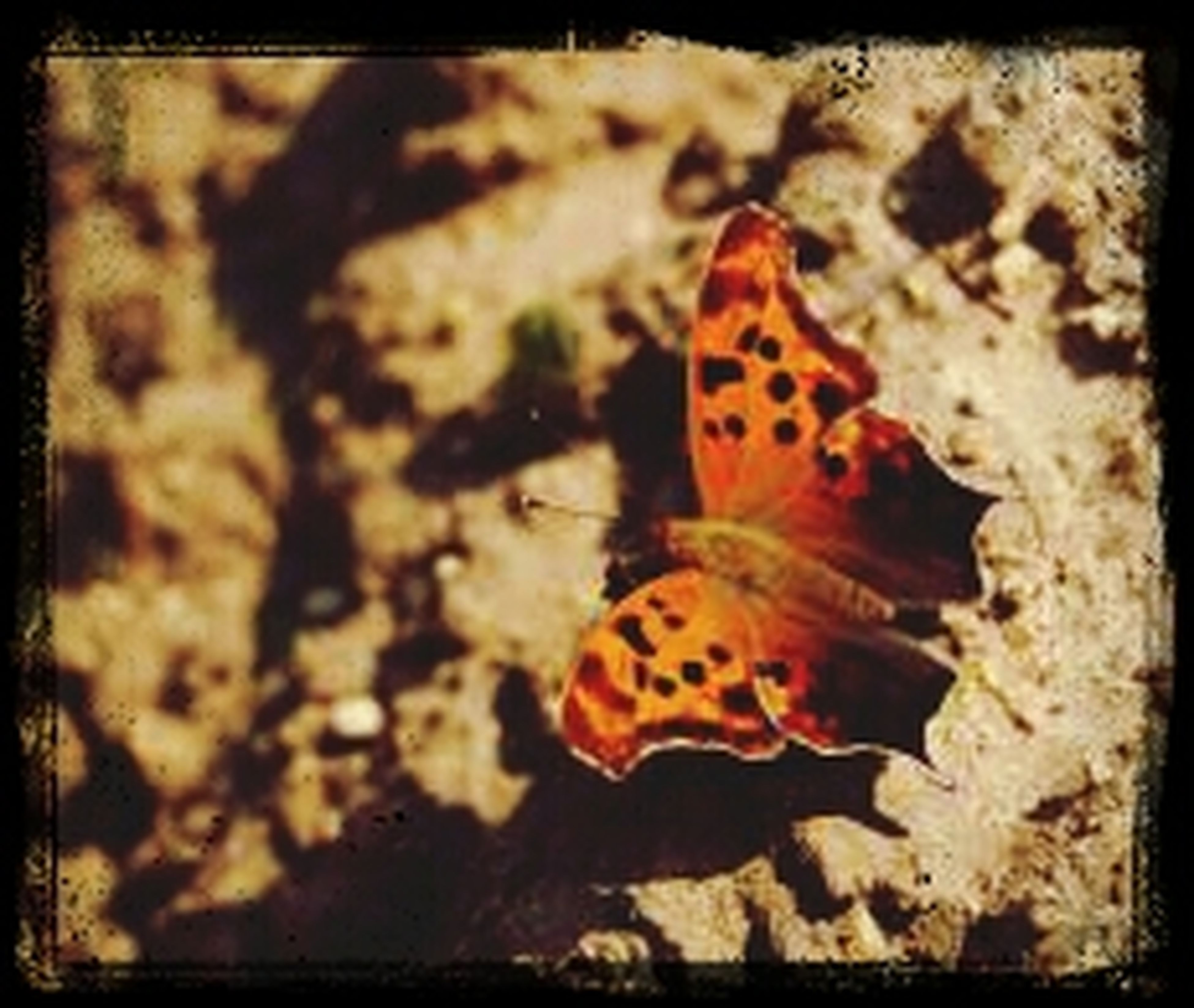 animal themes, transfer print, one animal, animals in the wild, wildlife, auto post production filter, high angle view, insect, close-up, natural pattern, nature, spotted, sea life, animal markings, no people, selective focus, outdoors, orange color, butterfly - insect, day