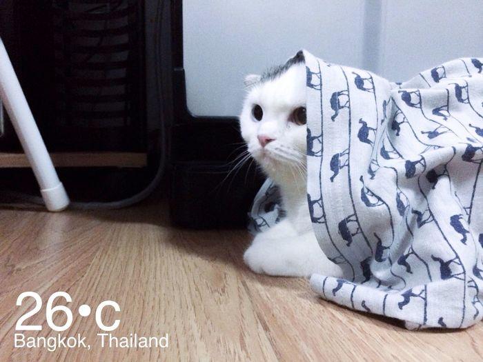 Already winter in Thailand. Cat Cute Kitten Cats
