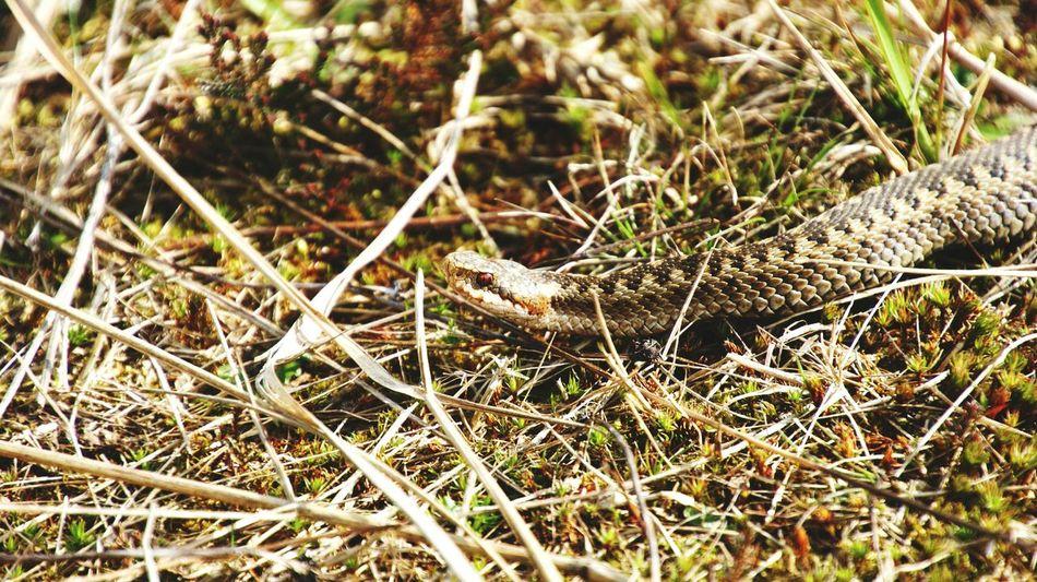Beautiful stock photos of snakes, Animal Themes, Animal Wildlife, Animals In The Wild, Close-Up