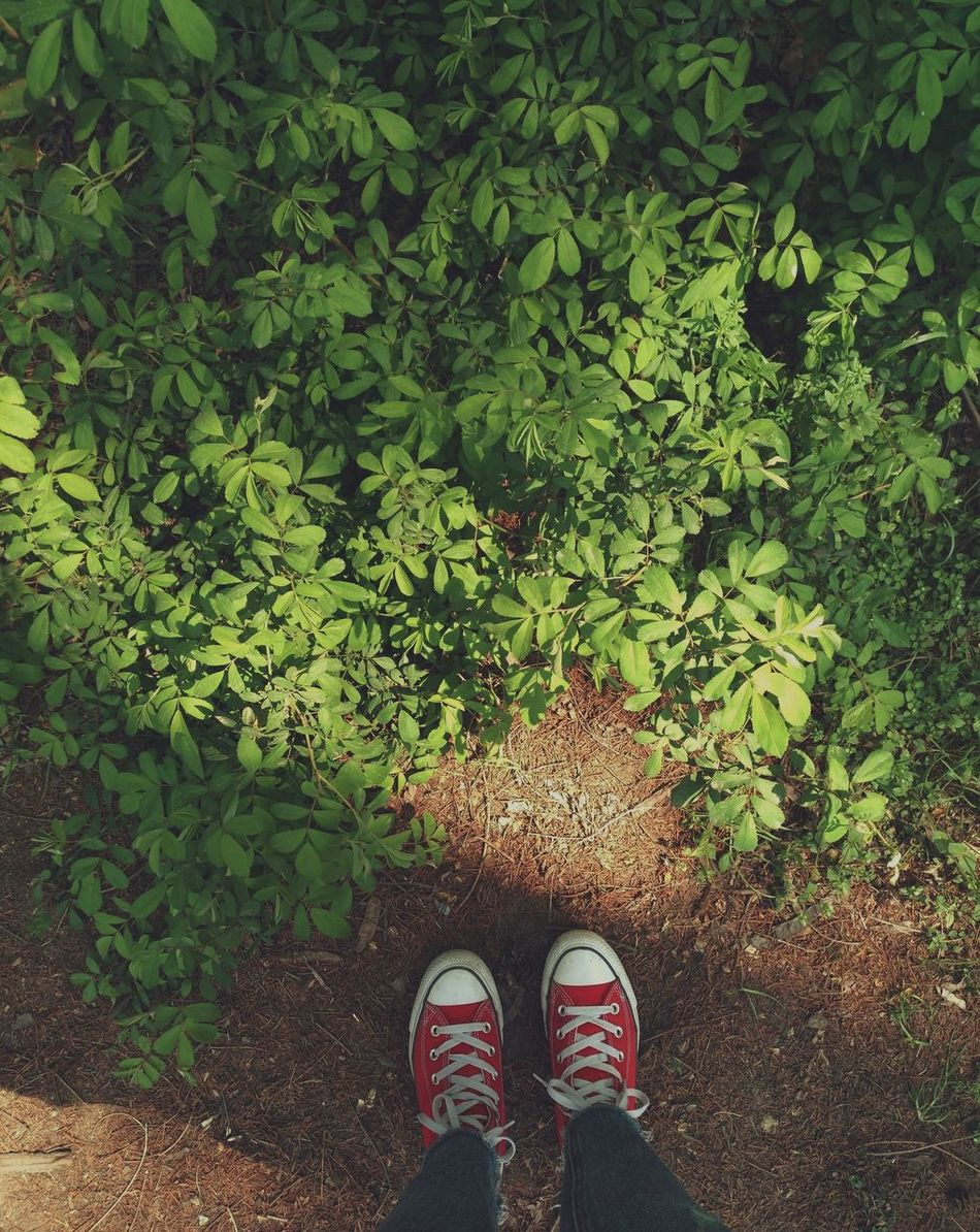 Low Section Shoe Human Leg One Person Standing Personal Perspective Human Body Part Real People Canvas Shoe Human Foot Green Color High Angle View Day Directly Above Outdoors Men Growth Lifestyles Grass Nature