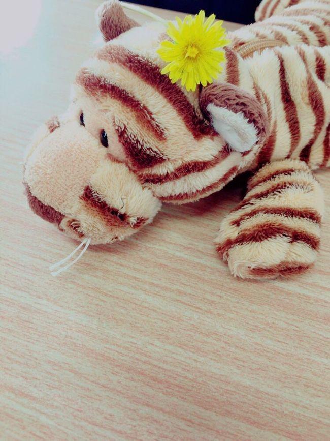 Pencase Porch Tiger Cute Friends Friend Dandelion Flower Yellow あたしが見つけてきたタンポポと、友だちの筆箱のテキちゃん😋💫