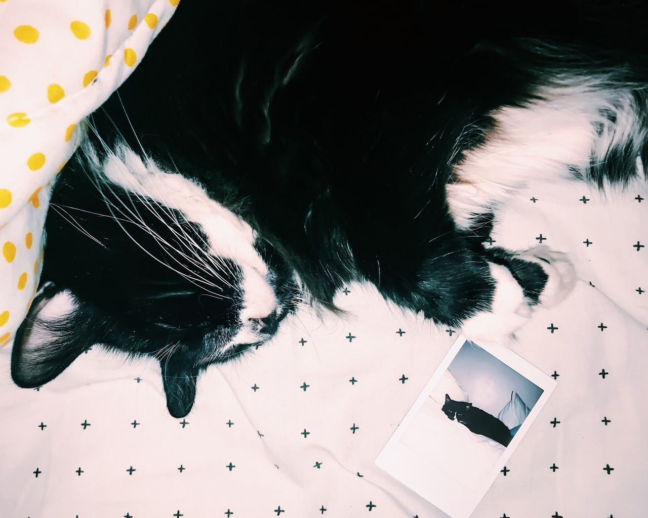 day 8 - Lionel Richie: the laziest cat to ever laze 😸💤 Instant Photo a Day pets animal themes domestic animals high angle view mammal one animal indoors no people close-up day Film film photography fujifilm Instax