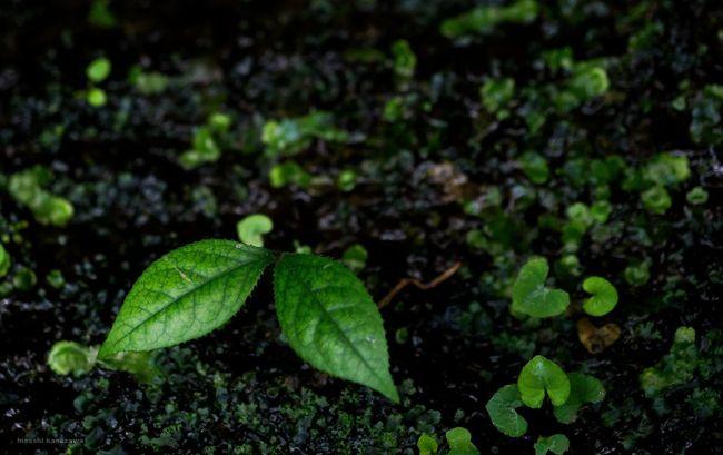 特に意識しなかったけど♥がいっぱい♪ Nature Photography Hearts Heart ❤ Photography Nokogiriyama 鋸山 Nature Beautiful Day
