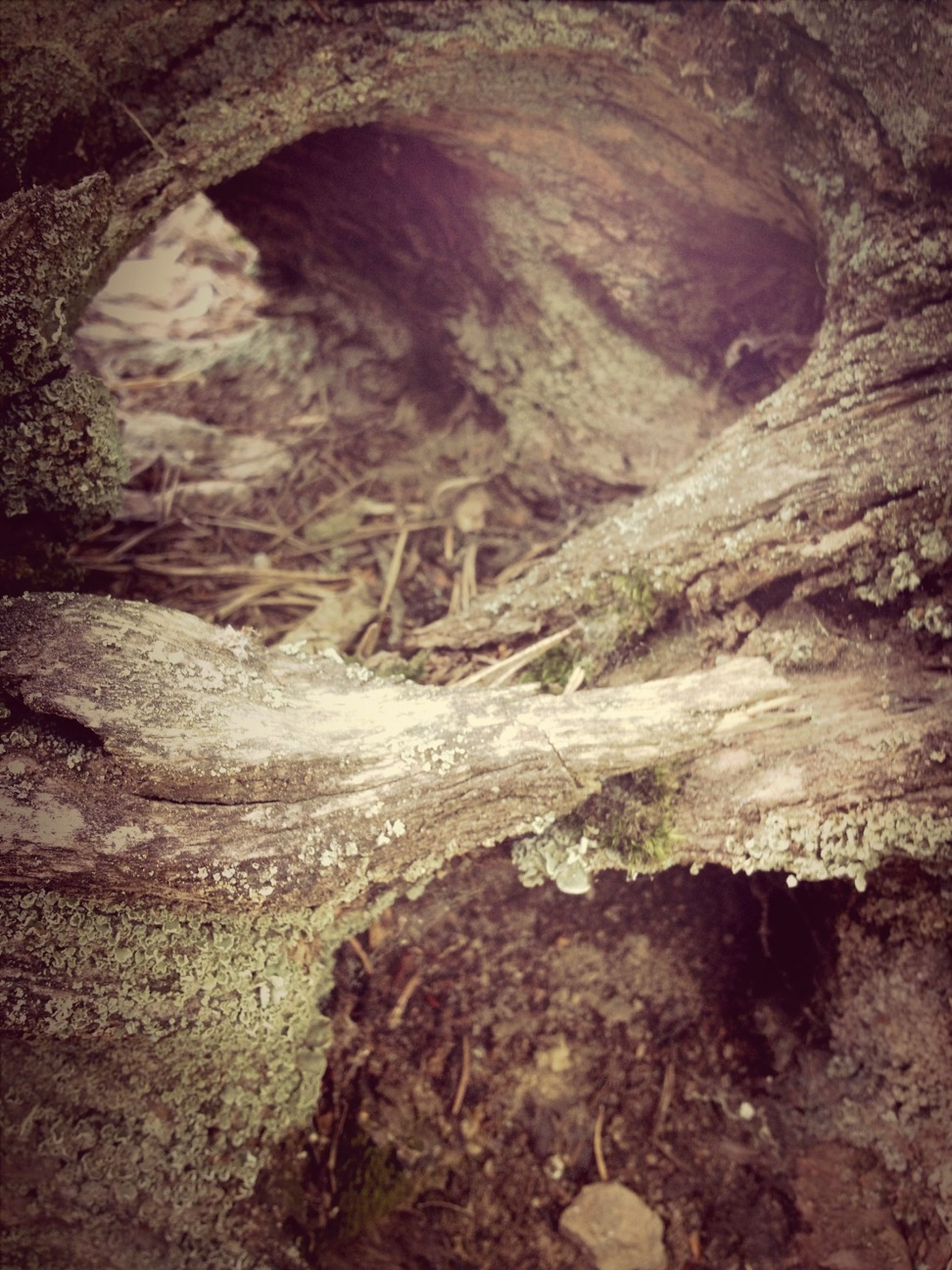rock formation, rock - object, geology, textured, nature, rough, eroded, rock, tranquility, cave, tree trunk, tree, physical geography, beauty in nature, natural pattern, tranquil scene, day, outdoors, no people, rugged