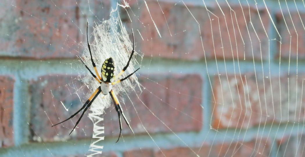 Spider Spider Web Sunlight NX2000
