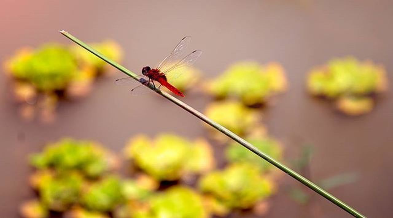 insect, macro, one animal, focus on foreground, plant, nature, animal wildlife, close-up, day, animal themes, outdoors, animals in the wild, damselfly, no people, fragility, freshness, perching