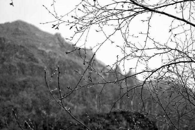 China Photos 백두산 백두산폭포 Hugging A Tree Rainy Days Tree Treepark Branch Of A Tree Raindrops Silhouette Bnw Bnw_life Black And White Blackandwhite Taking Photos Travel Feel The Journey Monochrome Photography Changbai Mountain, China Streamzoofamily
