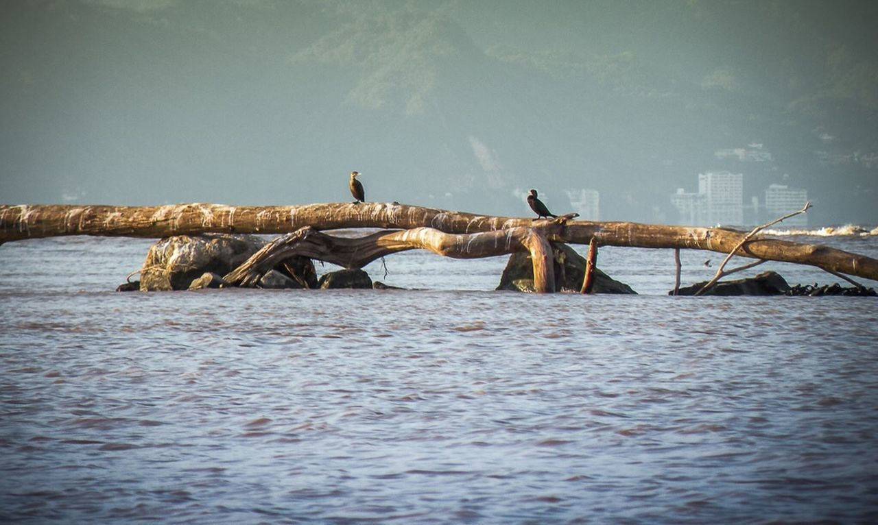 Two Birds Perching On Driftwood In Sea