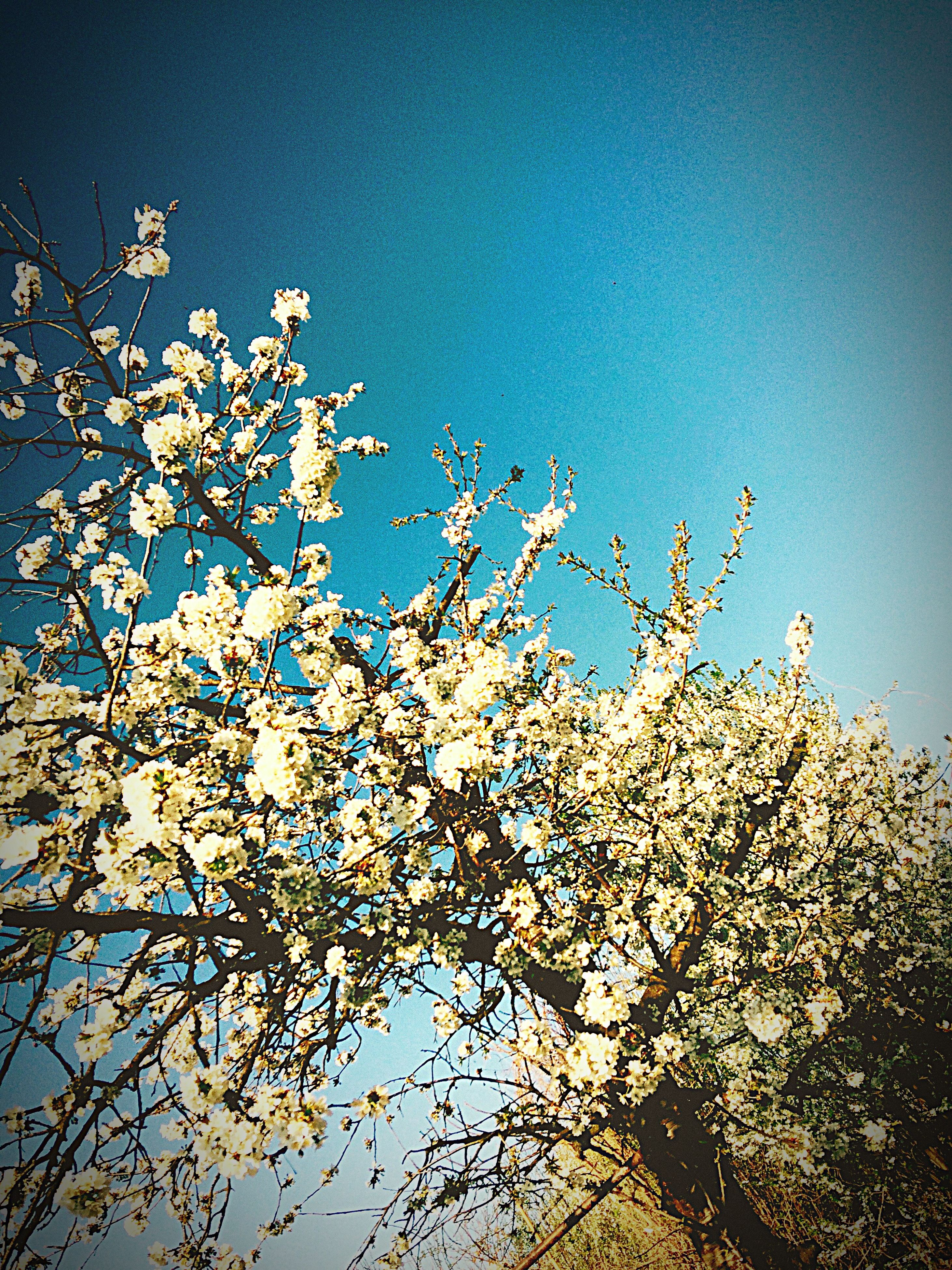 nature, low angle view, beauty in nature, no people, sky, growth, sunlight, clear sky, outdoors, close-up, tree, day, fragility