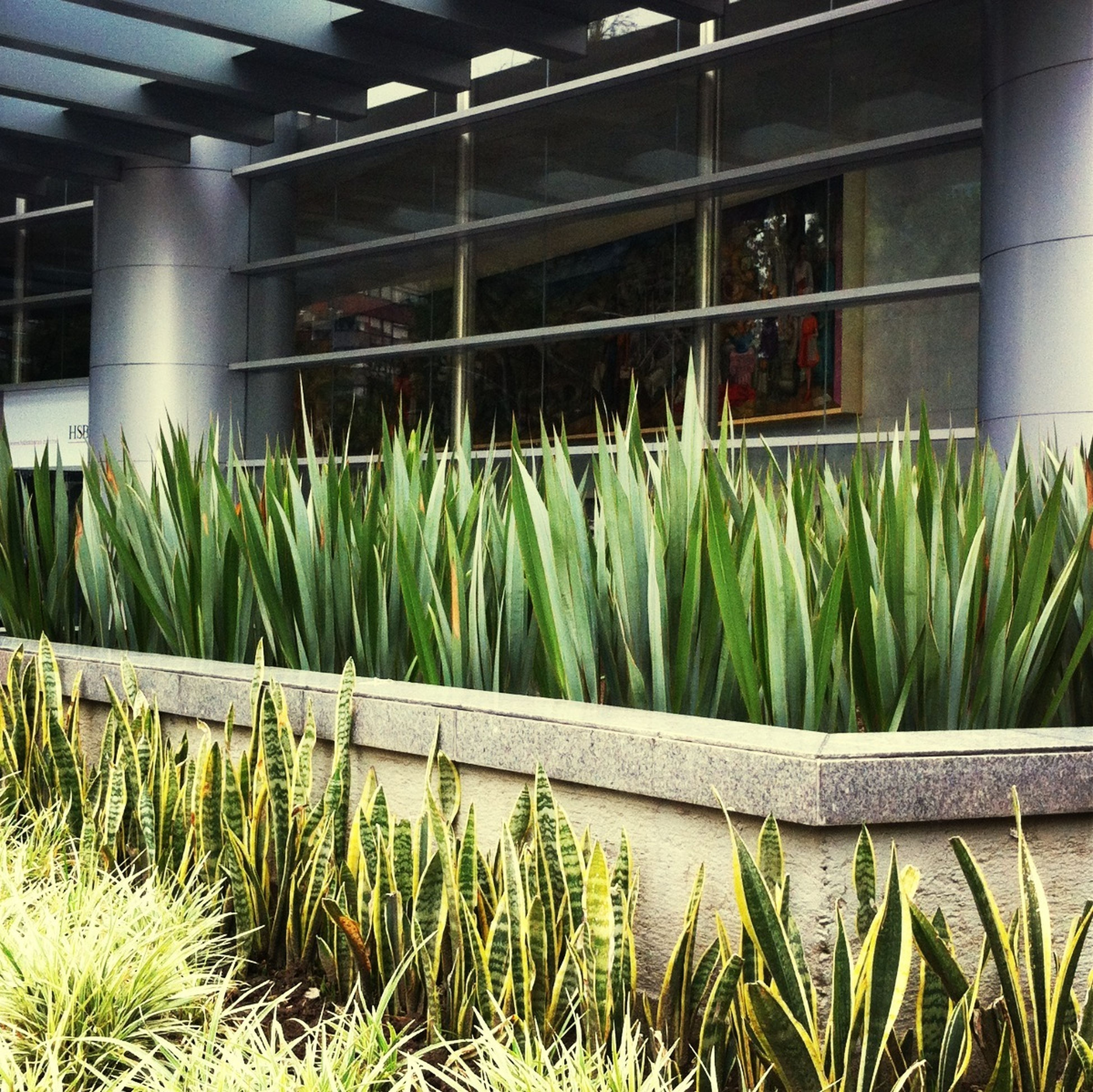 plant, growth, built structure, architecture, building exterior, grass, green color, house, growing, nature, potted plant, day, no people, window, outdoors, green, field, front or back yard, sunlight, water