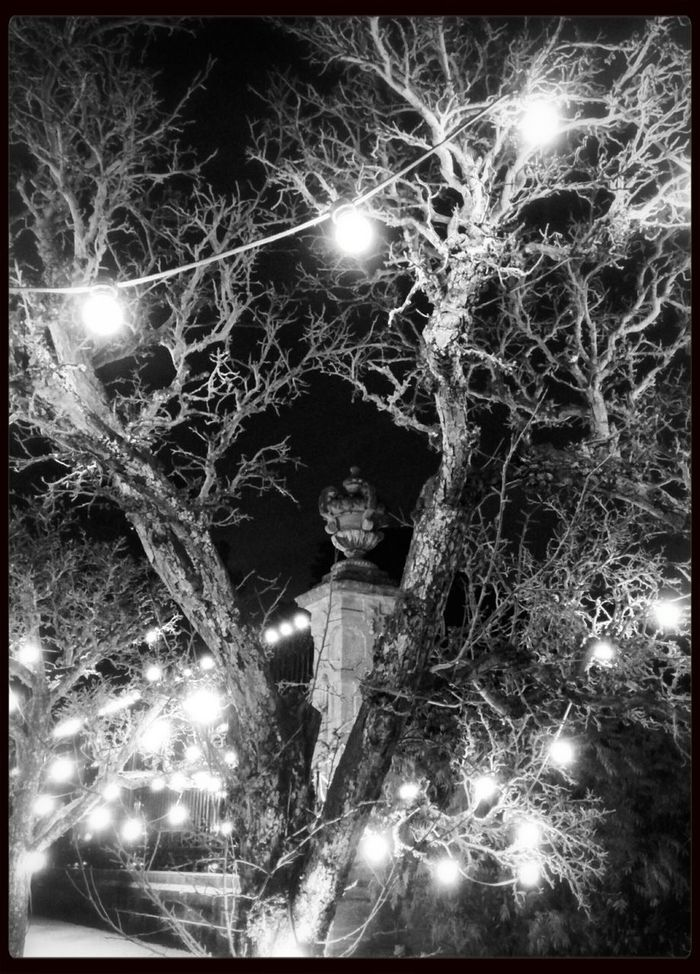 Black And White Tree_collection  Night Lights Historical Building
