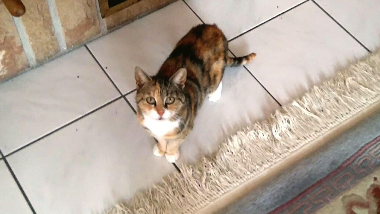 What ? Something wrong ? Pets Domestic Animals Cat Taking Photos Photography Feline EyeEm Best Shots Eyeem Best Shot Domestic Cat Tranquility