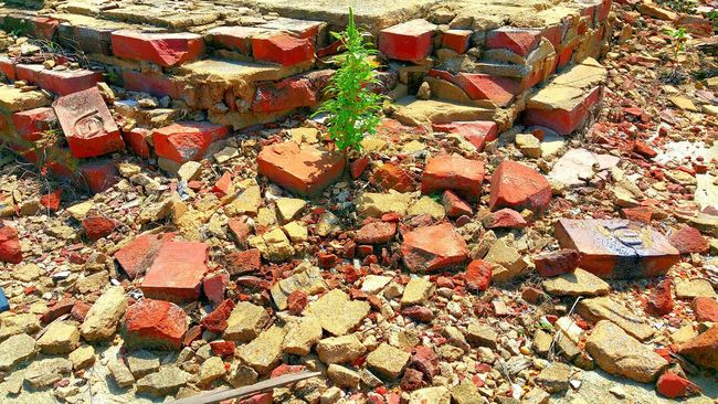 Plant Growth High Angle View Full Frame Nature Stone - Object Abundance Day Outdoors Beauty In Nature Green Color Brick Brickwork  Bricks Brickporn Broken Bricks Broken Stone Backgrounds No Filter