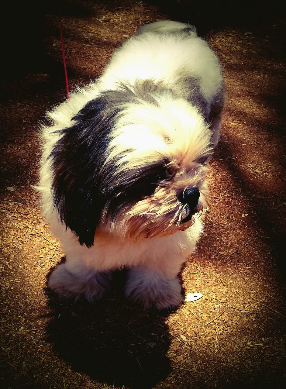pets, domestic animals, one animal, animal themes, mammal, dog, animal hair, no people, outdoors, day, close-up