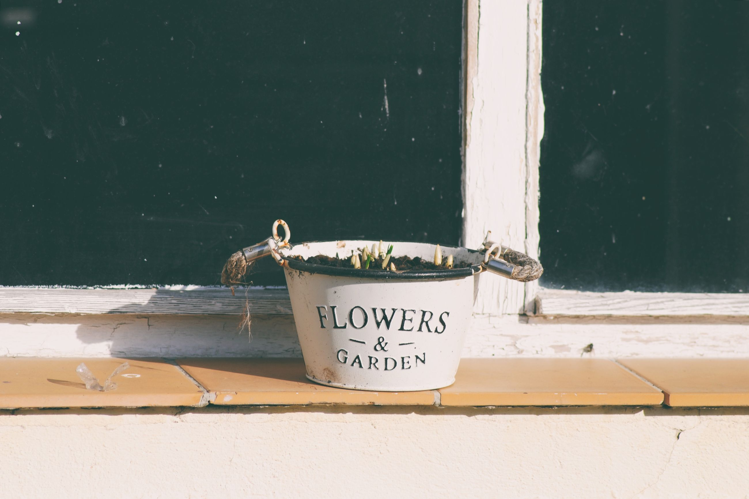 Flower Pot Plant Top Plant Growing Growth Window Nature New Life Seedling Young Plant Spring Spring Has Arrived Springtime Nature_collection Gardening Growing Plants Lifestyles Lifestyle Simple Window Sill Text Letters Vintage Old Vintage Style