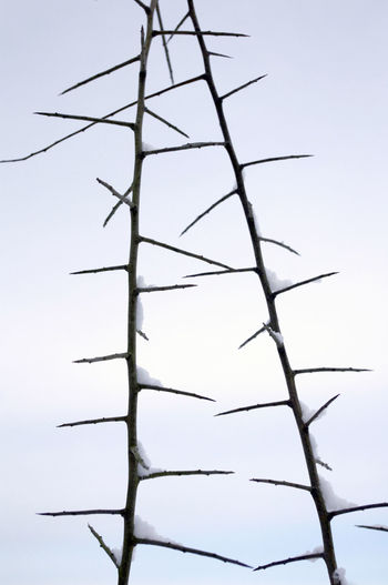 Cold Converging Day Low Angle View Low Temperature Nature No People Outdoors Snowy Day Thorny Plant