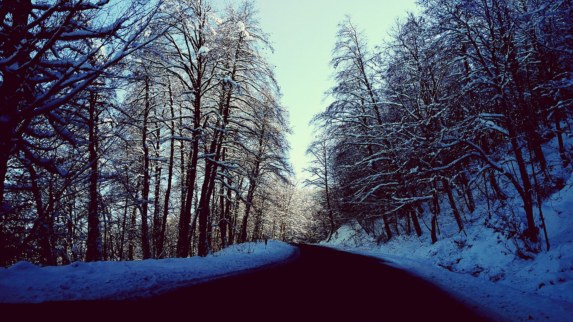 Asalem to Khalkhal road @ Talesh🙋 Guilan OR Gilan Iran♥ iran : Beauty In Nature Snow ❄ Jungle Heart Of Iran Snowy Trees Original Photography