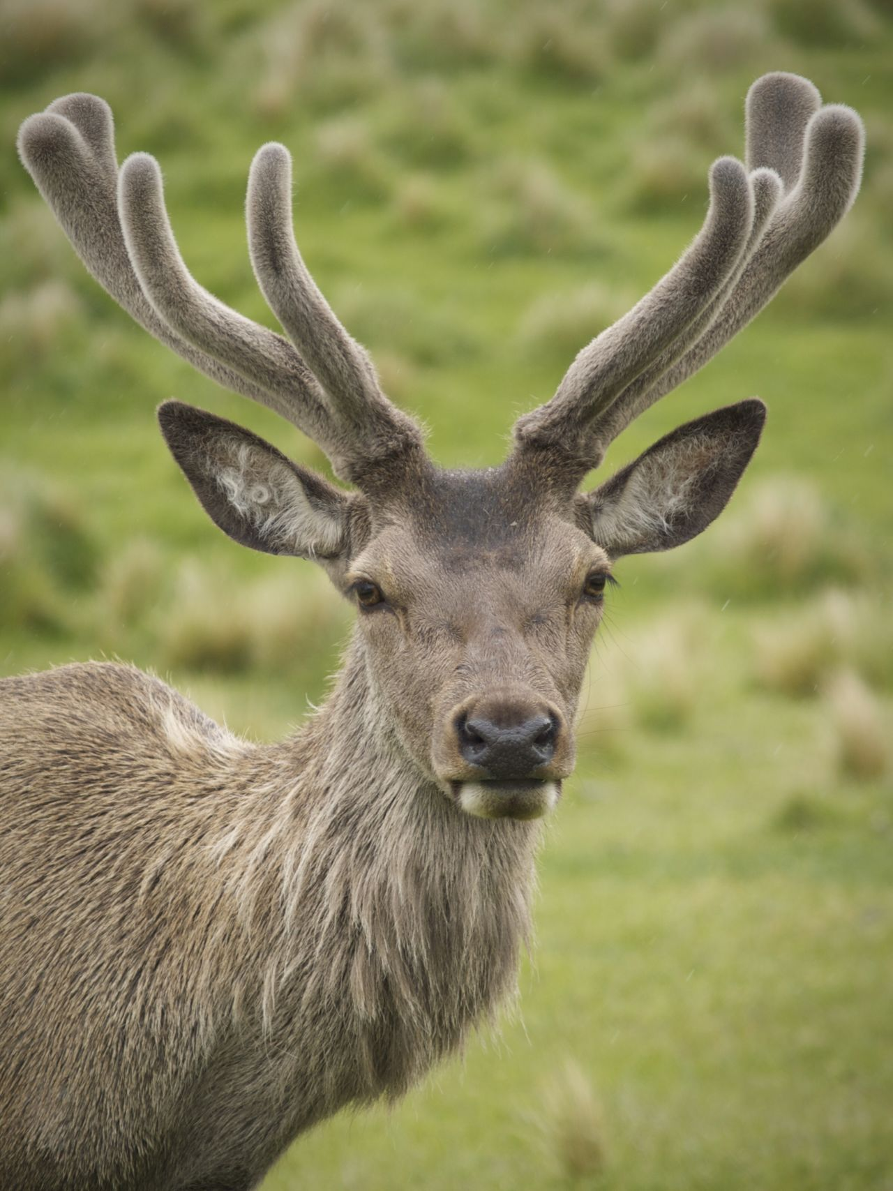 Beautiful stock photos of deer, Animal Themes, Animals In The Wild, Antler, Day