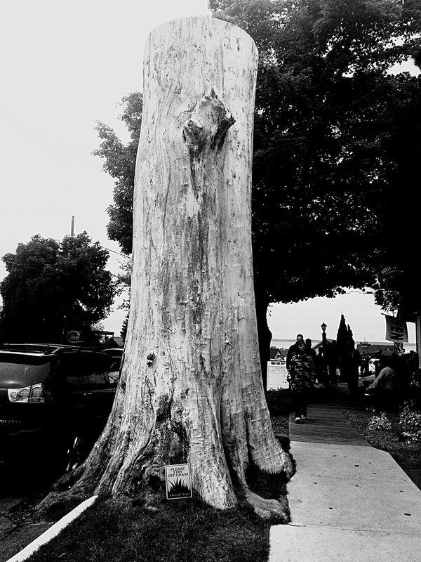 Leland Michigan Tree